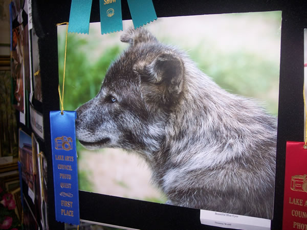 1st Place Wildlife & Nature Deanna Wolff