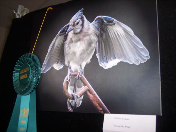 Best of Show Wildlife & Nature George Albright