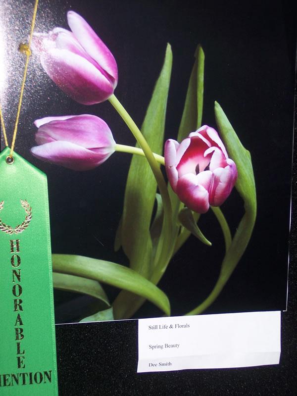 Honorable Mention Still Life & Florals Dee Smith