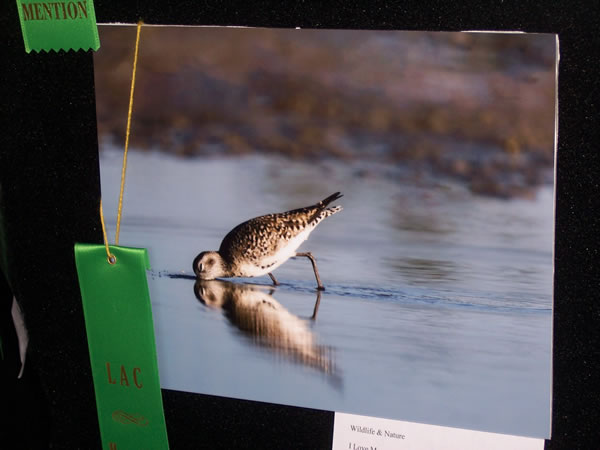 Honorable Mention Wildlife & Nature Dee Smith