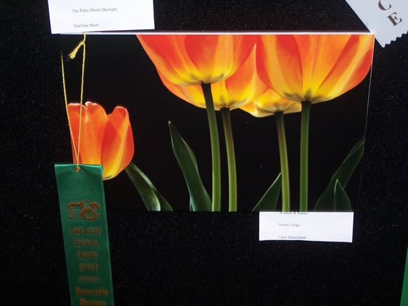 HONORABLE MENTION CAROL MESERSMITH WILDLIFE & NATURE