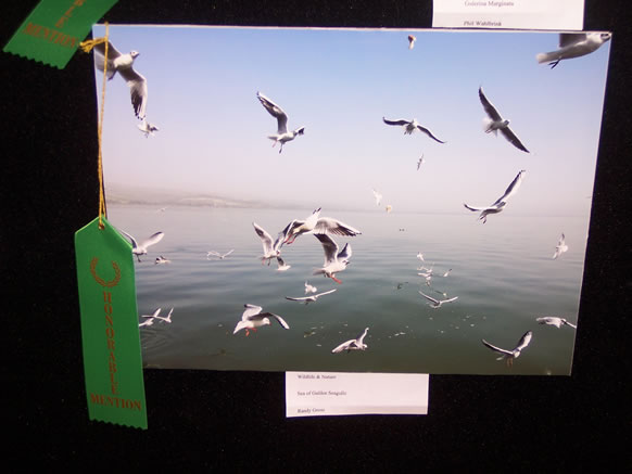 HONORABLE MENTION RANDY GROSS WILDLIFE & NATURE
