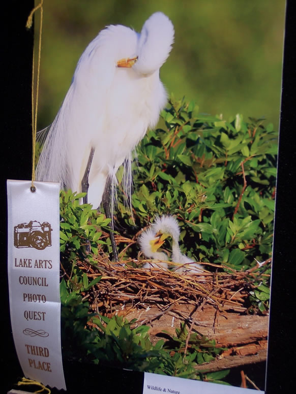 THIRD PLACE BETH BUTTON WILDSLIFE & NATURE